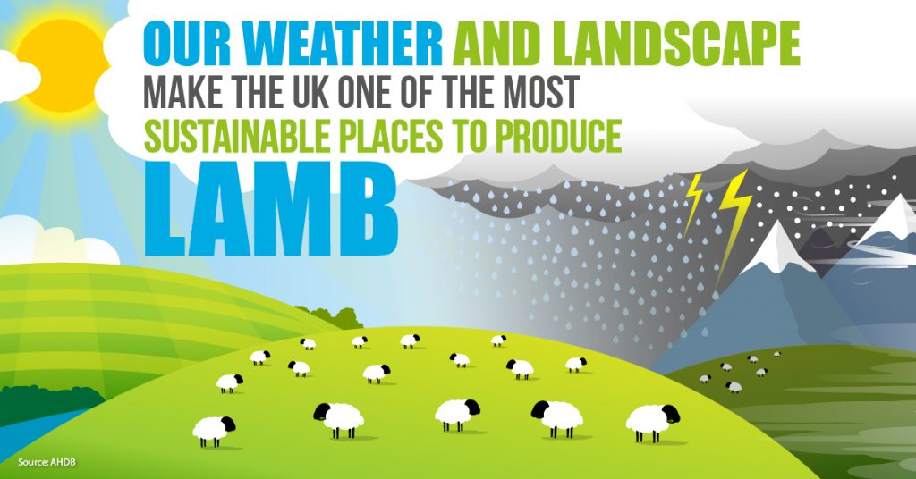 Sustainable lamb